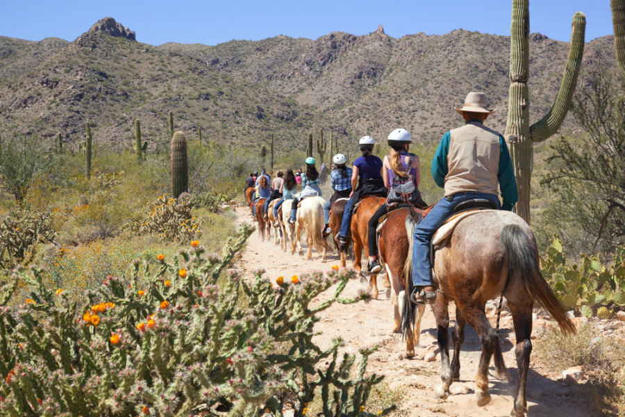 A guided horseback riding tour, in the Sonoran Desert right outside of Phoenix, Arizona in spring time.