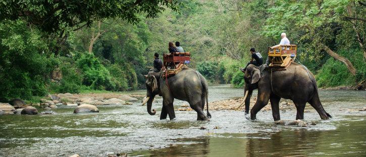 100besttips-elephants