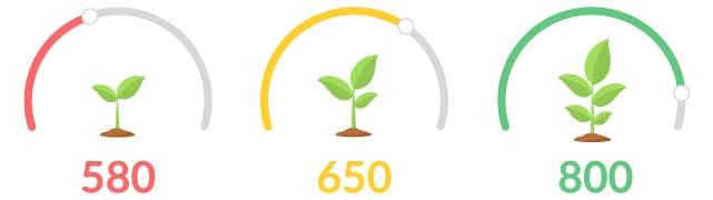 Plants showing Credit Score Growth